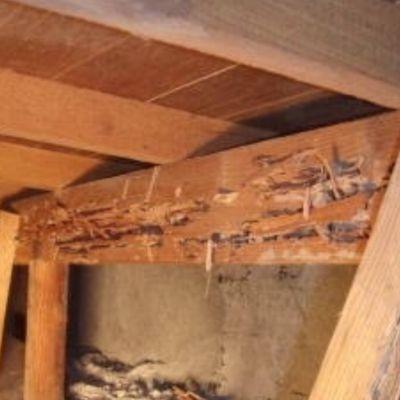 床下の構造とシロアリが気になりますの画像